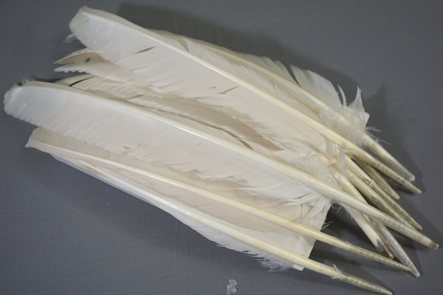 12 Heritage White Primary Turkey Feathers Grade #1