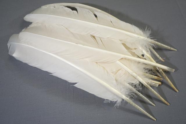 "BARRED TURKEY WING-FLIGHT FEATHERS,FLY TYING,CRAFT,11-12/"" 12"