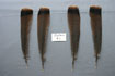 12 Adult Eastern Tail Feathers Grade #1