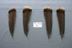 12 Adult Rio Grande Tail Feathers Grade #1